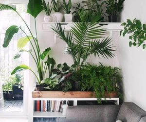 plants and green image