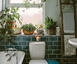 plants, bathroom, and home image