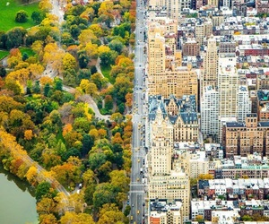 Central Park, city, and nature image