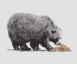 animals, bears, and illustration image