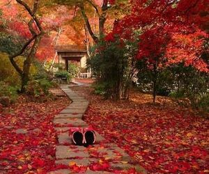 autumn, colors, and seasons image
