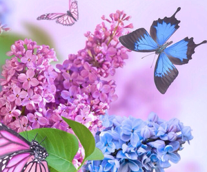 background, butterfly, and flowers image