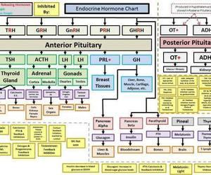 aspirin, biology, and medical image