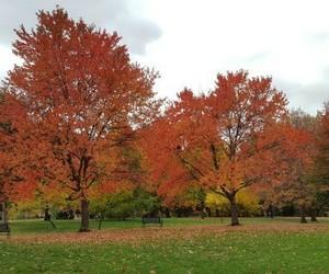 autumn, landscape, and suburb image