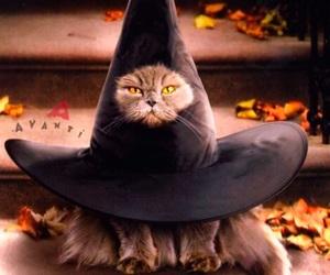 animals, autumn, and Halloween image
