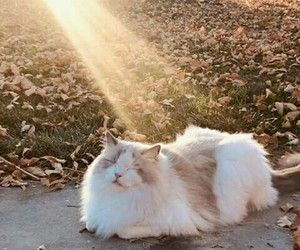 cat, autumn, and sun image