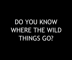 things, wild, and alt-j image