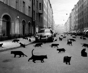 cat, street, and black image