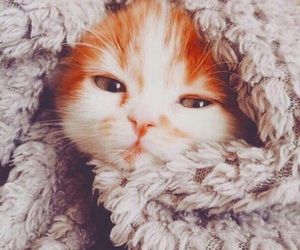 blanket, cat, and christmas image