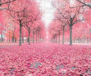 tree, beautiful, and pink image