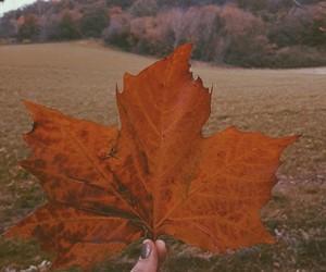 autumn, fall, and glitter image