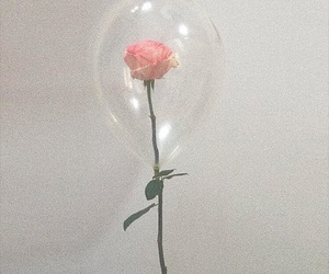 rose, aesthetic, and balloon image