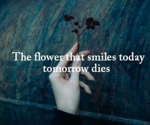 die, flower, and quotes image