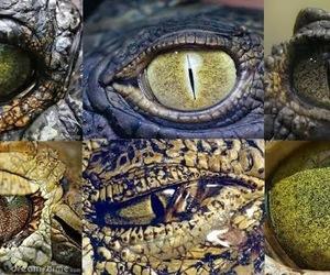et, eyes, and sight image