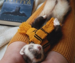 ferret, harry potter, and thebookferret image