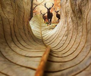 deer, leaves, and autumn image