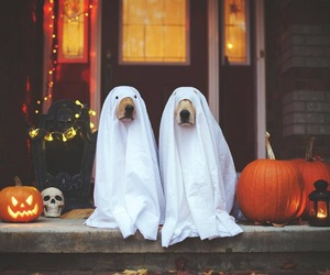 dog, Halloween, and puppy image