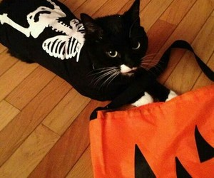 Halloween, cat, and animal image
