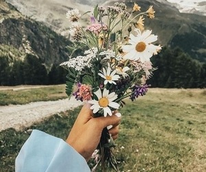 daisy flower, flower, and mountain image