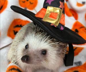 blanket, Halloween, and hedgehog image