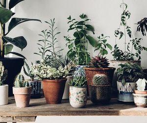 cactus, indoor, and mini image