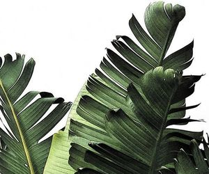 plants, leaves, and green image