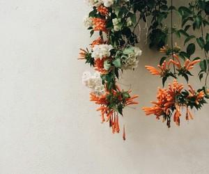 flowers, orange, and nature image