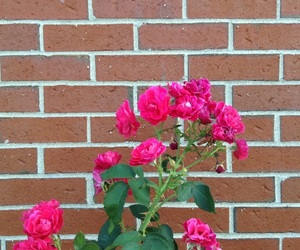 brick, flowers, and red aesthetic image
