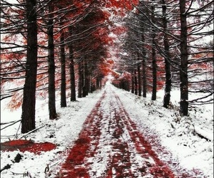 snow, red, and forest image