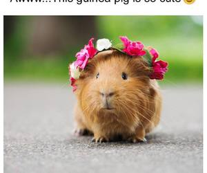 cuteness, flowers, and guinea image