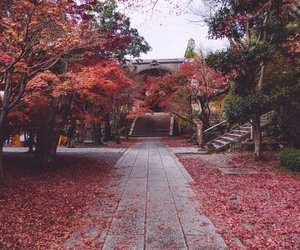 beautiful, leaves, and pink image
