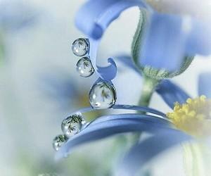 drop, flowers, and rain image