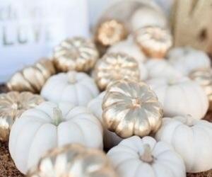 pumpkin, fall, and gold image