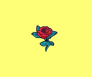 rose, yellow, and wallpaper image