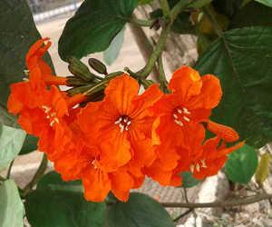 botanical, delightful, and gorgeous image