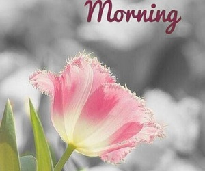 flower, pink, and good morning image