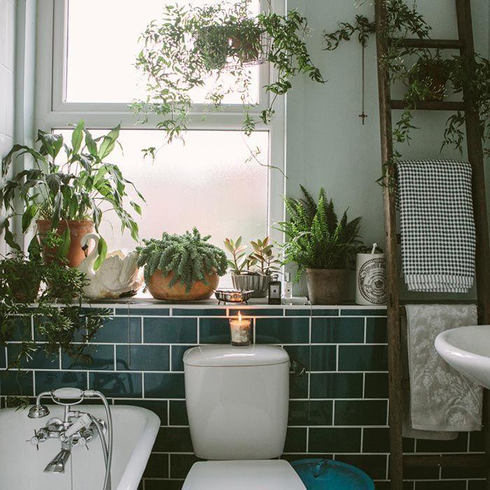 plants, bathroom, and home image