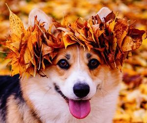 autumn, best friend, and fall image