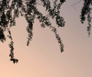 aesthetic, evening, and tree image