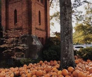 fall, orange, and season image