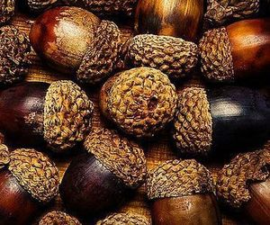 acorns, autumn, and brown image