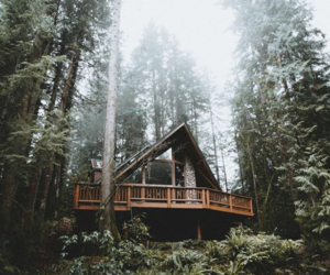 cold, forest house, and woods image