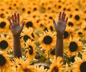 sunflower, flowers, and yellow image