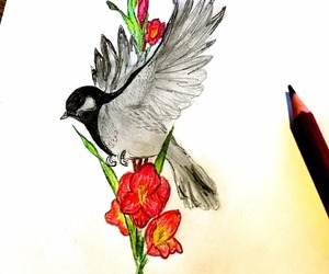 bird, colors, and draw image