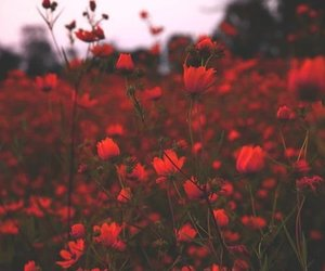 flowers, red, and nature image