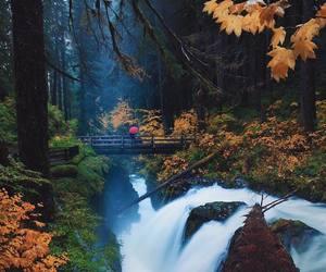 amazing, freedom, and landscape image