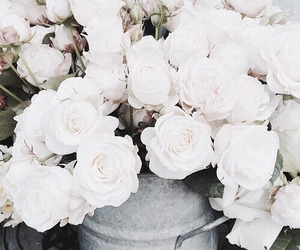 beautiful, rose, and white roses image