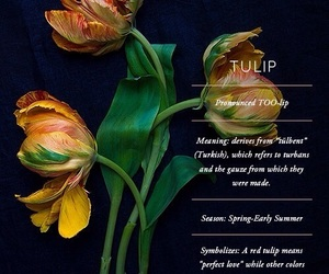 flowers, theme, and tulips image
