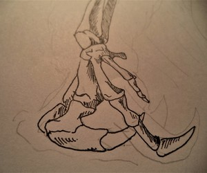 anatomy, anteater, and bones image