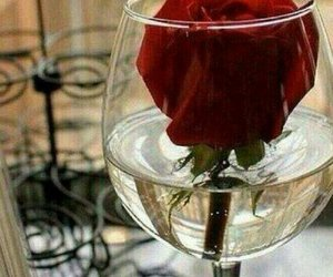 aesthetic, flower, and glass image